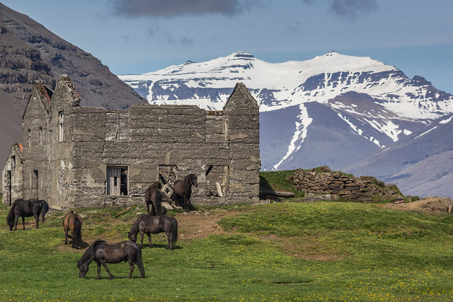 Ruin with Horses