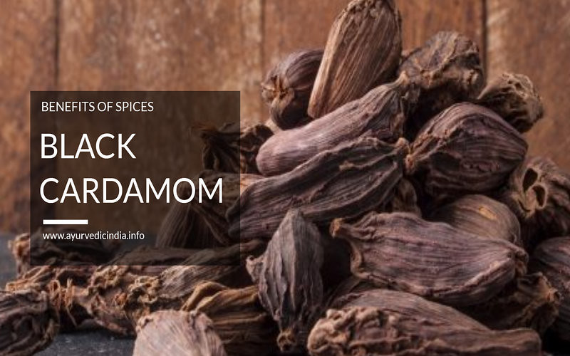 Black Cardamom (Badi Elaichi) - Health Benefits and Side Effects