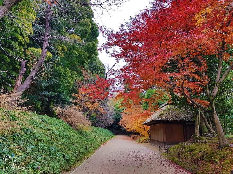 okayama korakuen autumn