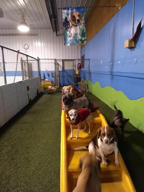 01/24/18 Playtime + Happy Dog Playschool!