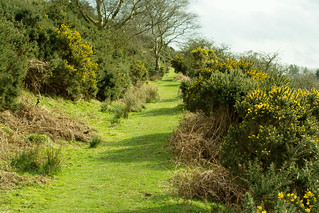 20170330-61_Gorse Lined Green Grassy Path