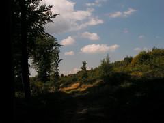 20070831 11942 0707 Jakobus Wald Weg Bäume Wolken