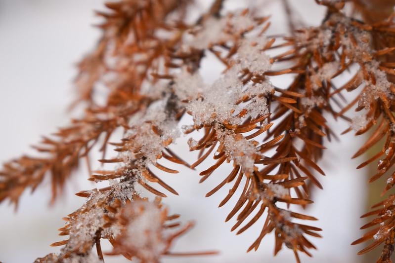 suomen luonto talvella2