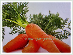 Recently harvested orange Daucus carota (Carrot, Wild Carrot, Queen Anne's Lace), Feb 18 2018