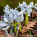 Iris at RHS Wisley-E2120317