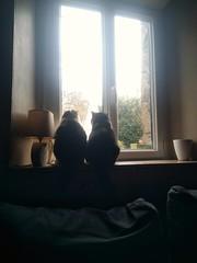 Les inséparables - Photo of Chevry