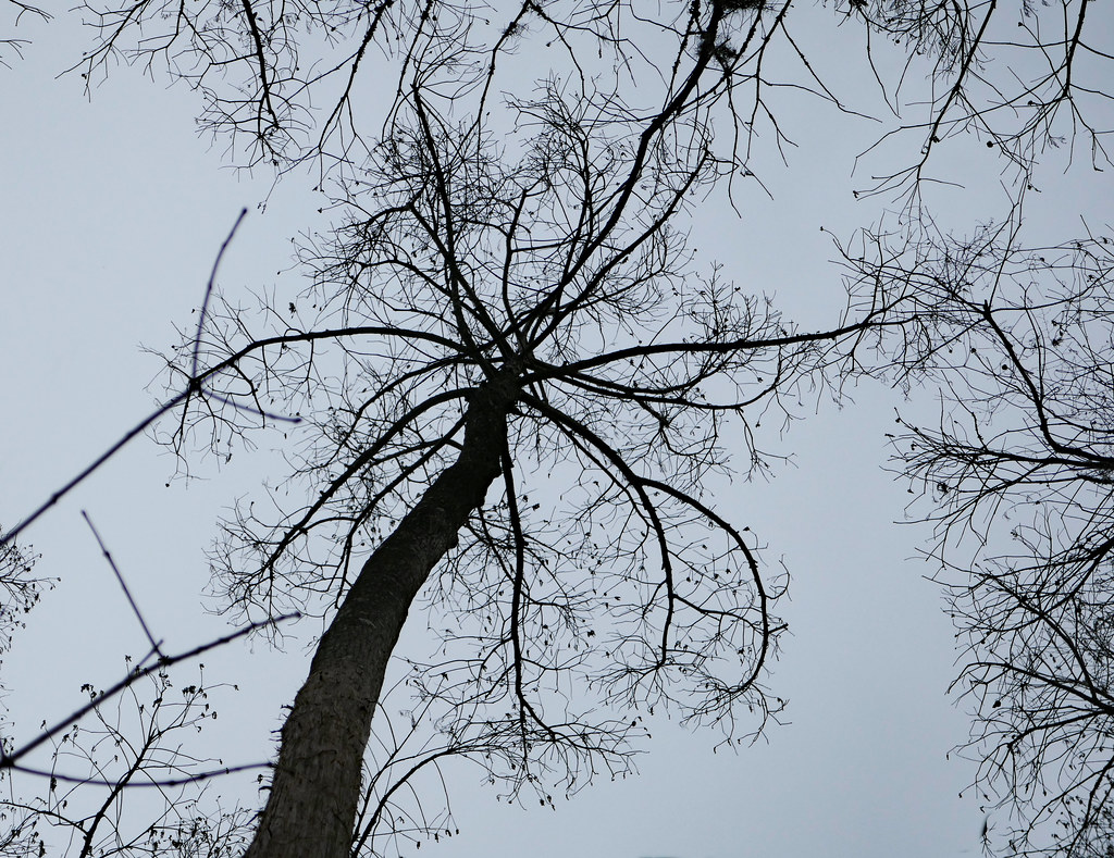 Bare tree brances, high above | At Fairview-Riverside State