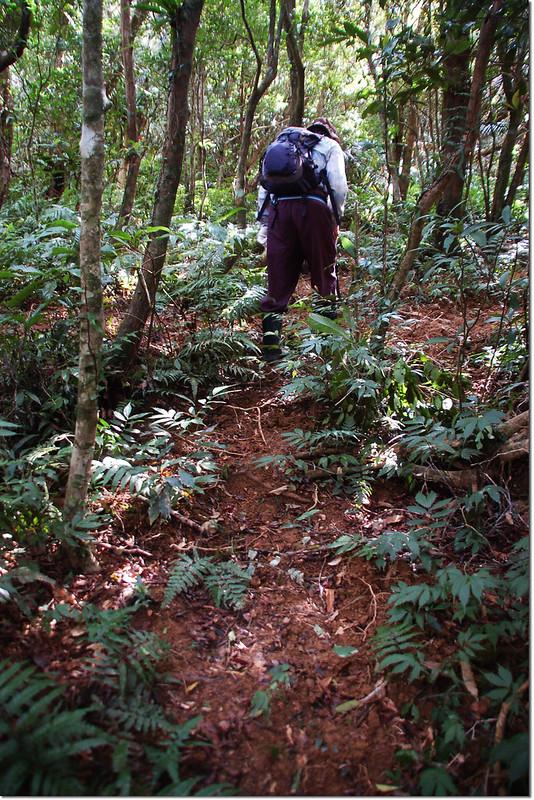 牡丹路山登山路徑 1