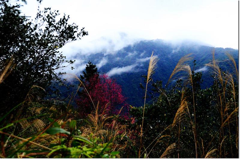新武界山山景