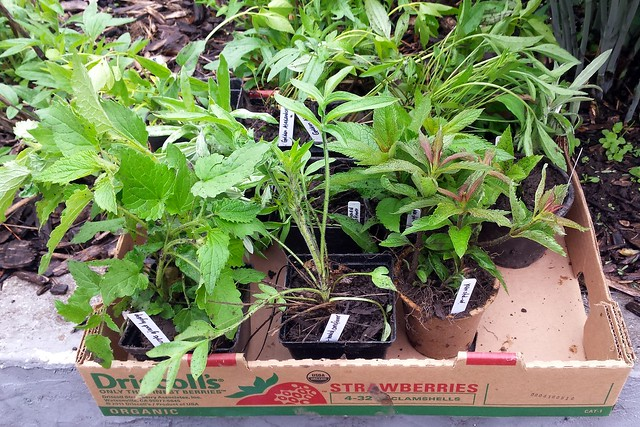 cardboard fruit box holding about a dozen small potted plants