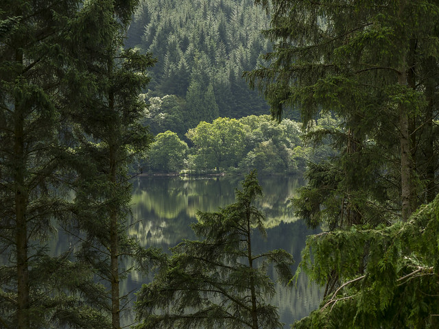 Lush Green Trees of Summer - Loch Eck August 2017