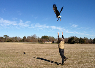 eagle release belle isle state park