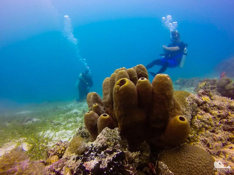 Pipe sponges