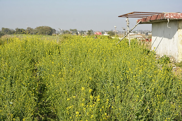 A 16-acre dumping yard was transformed into the sanitation park at Ambikapur.