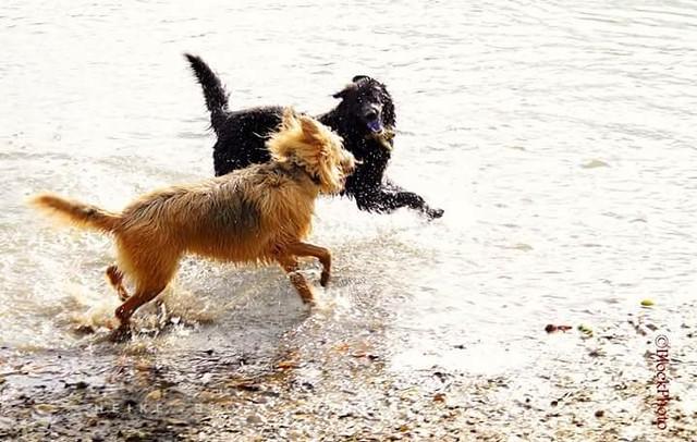 Dog's fun!