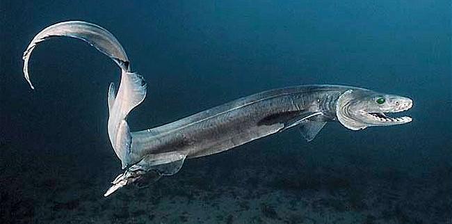 كائنات غير معروفة في اعماق المحيط