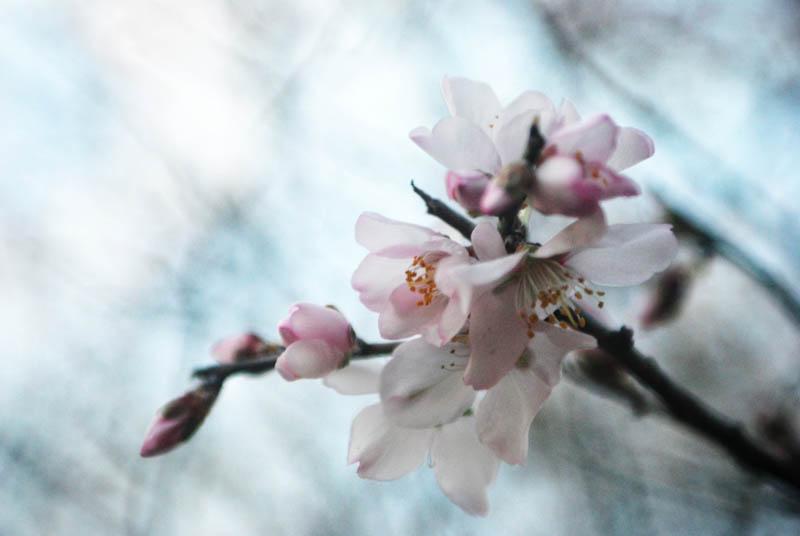 Blossoming | Em flor