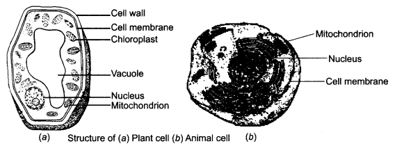 ncert-solutions-for-class-8-science-cell-structure-and-functions-3