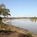 Luangwa River - Zambia