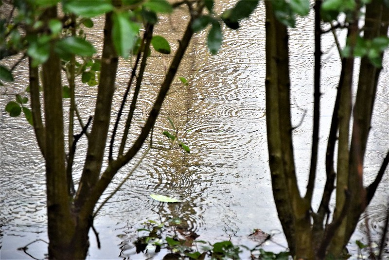 Rain 22.01 (1)