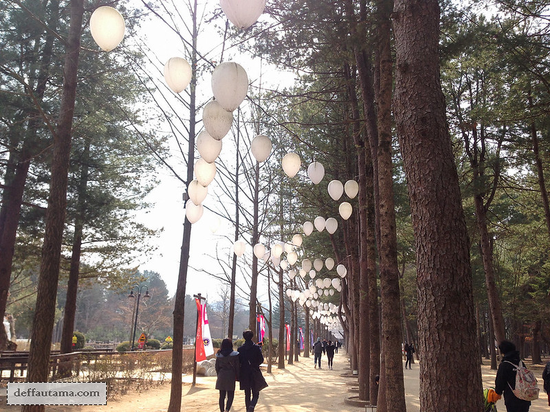 Nami Island - The Walking Path