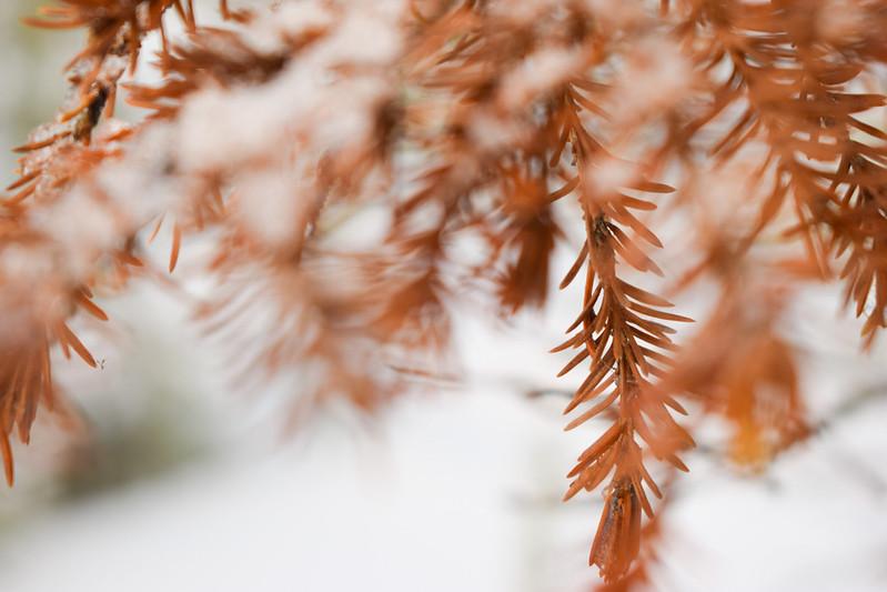 suomen luonto talvella