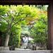Au porte du temple ...KYOTO