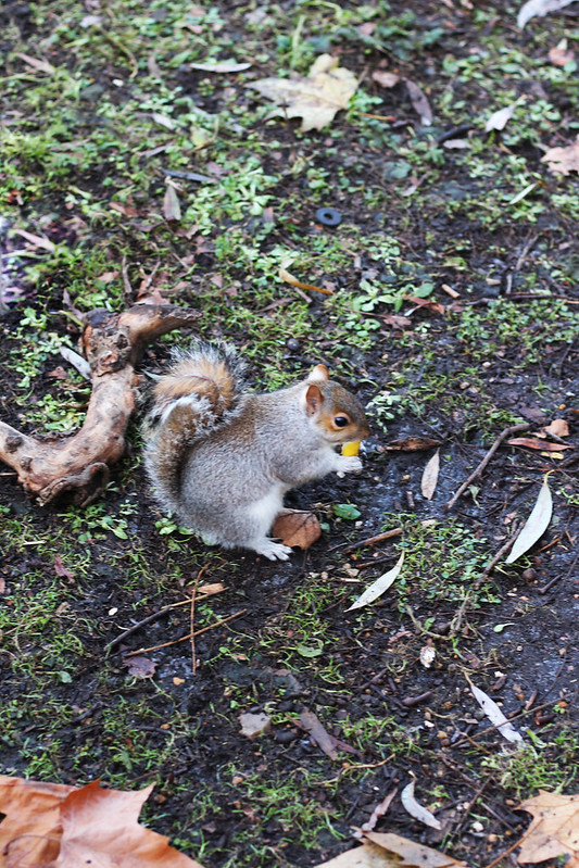 cuttie squirrel Hyde Park London