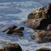 Honu - Sea Turtle