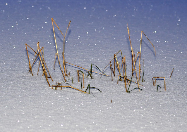 Straws in snow
