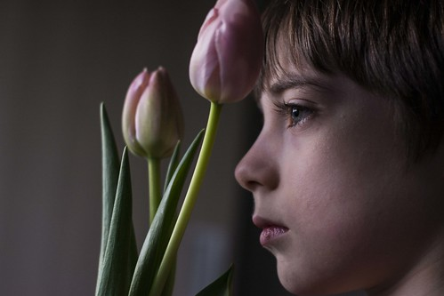 Tardes con T de Tulipan