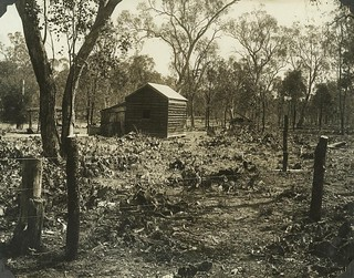 Property at Chinchilla after treatment of Prickly Pear by using cactoblastis moths October 1929