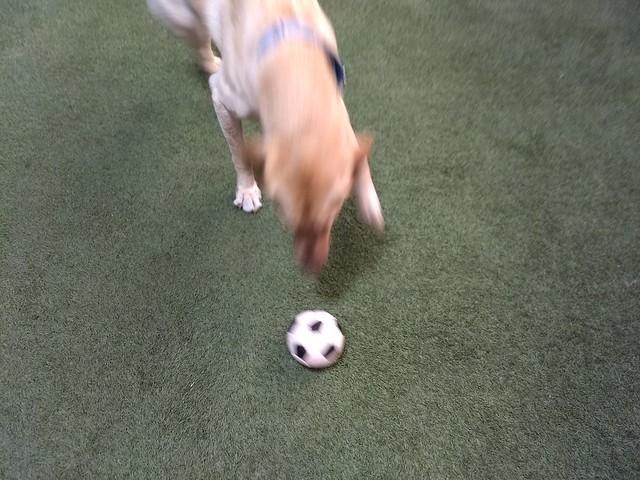 01/21/18 Soccer Ball Play :D