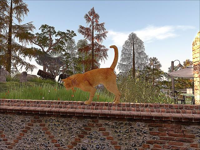 Soul2Soul Bay  - Cat Chases Dandelions