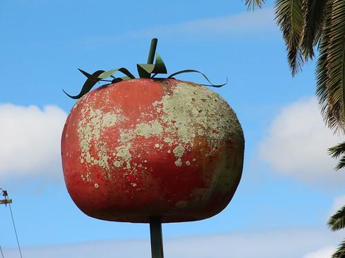 tomato on a pole