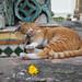 Temple cat by Zirri.