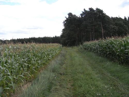 20100825 173 0105 Jakobus Wald Weg Maisfelder Pilger ElisabethB