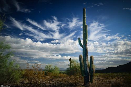 arizona buckeye cacti cactus clouds cloudy desert kenmickelphotography landscape landscapedesert outdoors plants saguaro sky skylineregionalpark topaz topazadjust nature photography unitedstates us