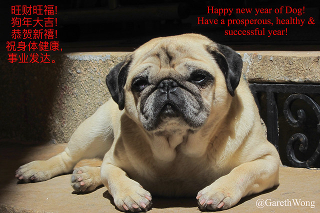 Happy new year of the dog_o