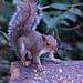 21 Squirrel
