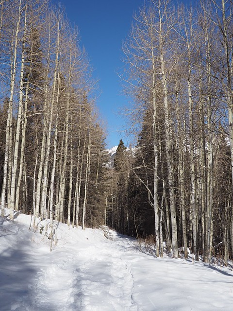 Wed, 2018-01-17 14:01 - Bear Creek Trail