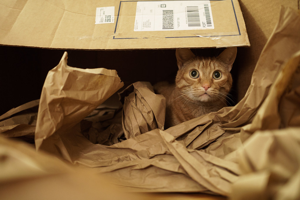 Our orange tabby cat Sam looks out from a cardboard box, surrounded by brown wrapping paper