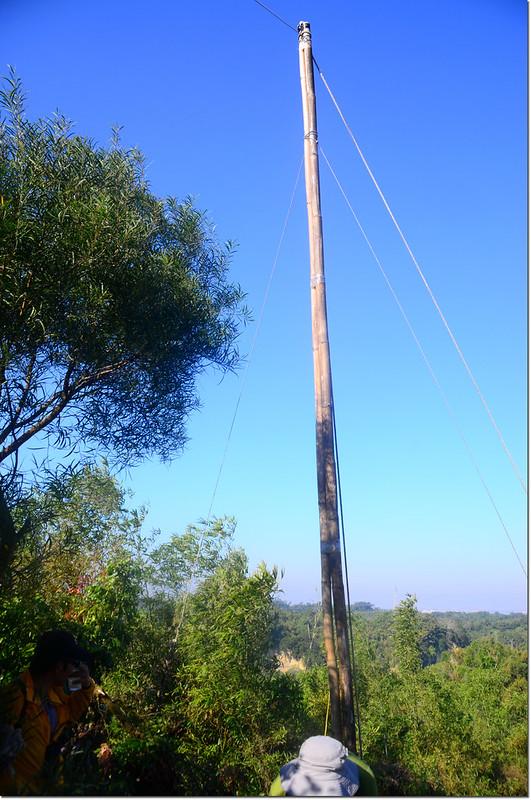 擄鴿集團掛網用竹竿 3
