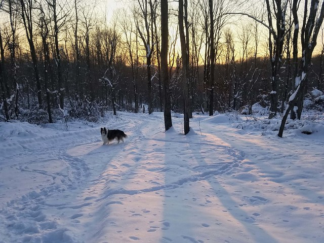 Ben and the Snowy Sunset