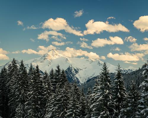 mayrhofen iarna firtree winter alpine fir munte brazi peaks padure sunset peak copaci clouds glow forest snow white alb zapada mountain