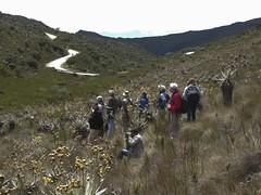 Birding at Chingaza National Park