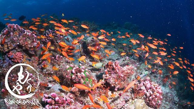これだけの魚達を維持できるだけの栄養がここにはあるんだよなぁ♪
