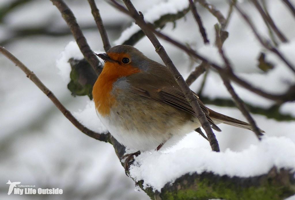 P1130206 - December Snow in Leeds
