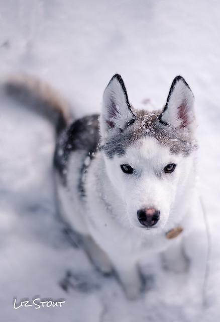 20180117 Snow Dogs_160