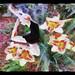 Dance among lilies - Danza entre lirios